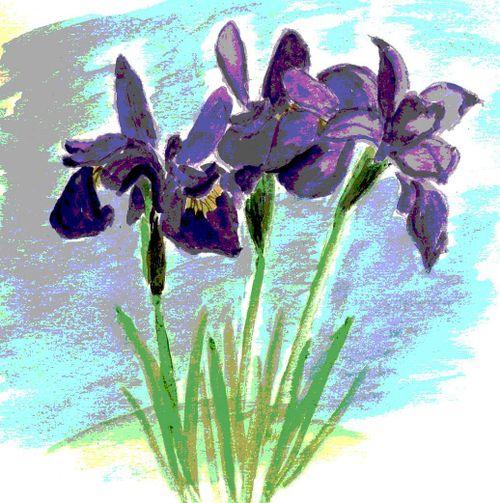 Posterized siberian irises